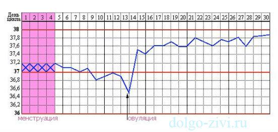 бланк для таблицы овуляции