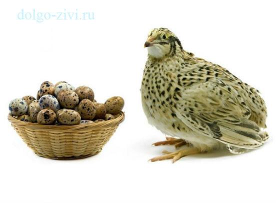 яйца и перепелка
