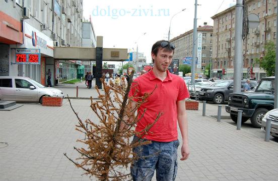 парень выносит елку
