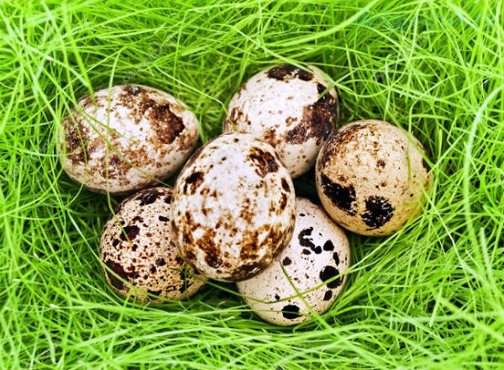 яйца в траве