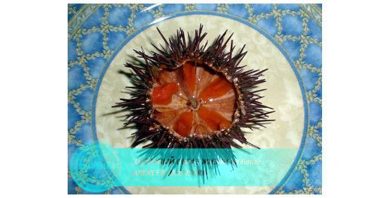 морской еж на тарелке