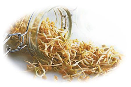 проростки пшеницы