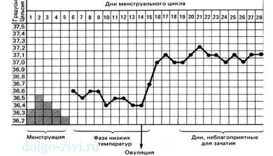 таблица овуляции