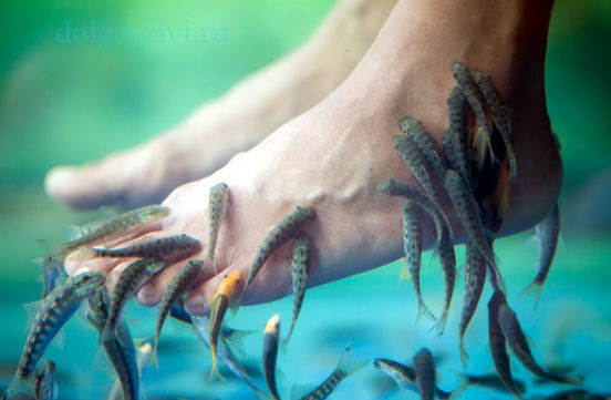 педикюр с рыбками