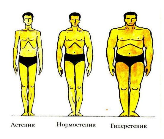 астеники и гиперстеники