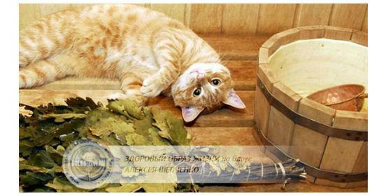 кот в бане