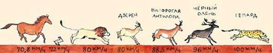 скорость бега