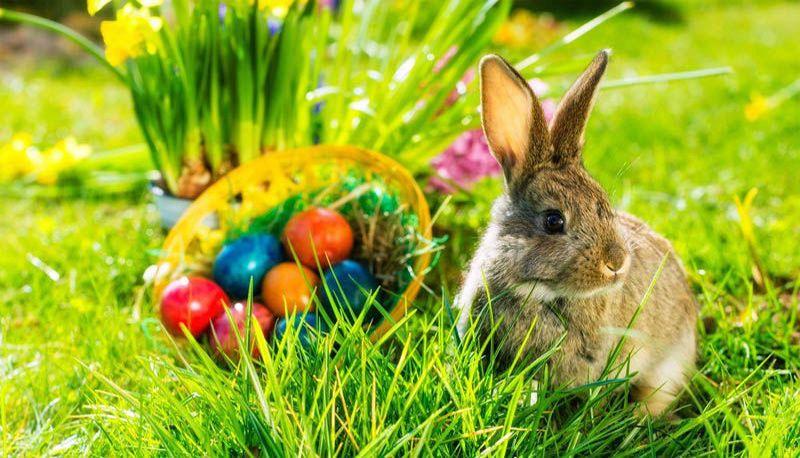 заяц в саду