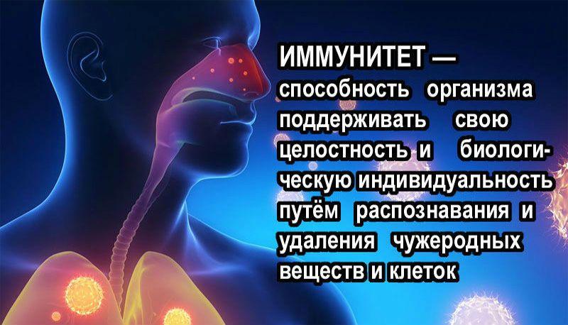 иммунитет способность организма