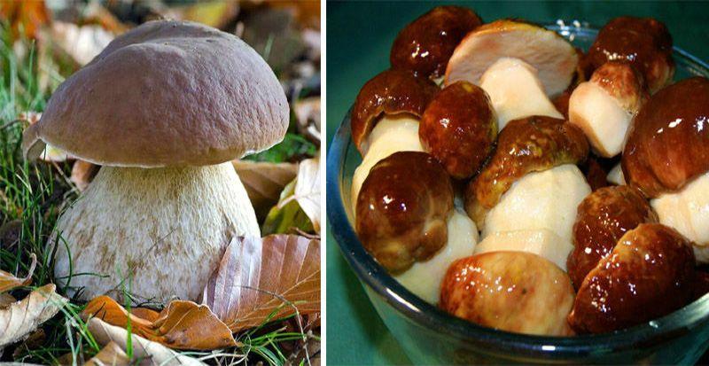маринованные грибы в банках