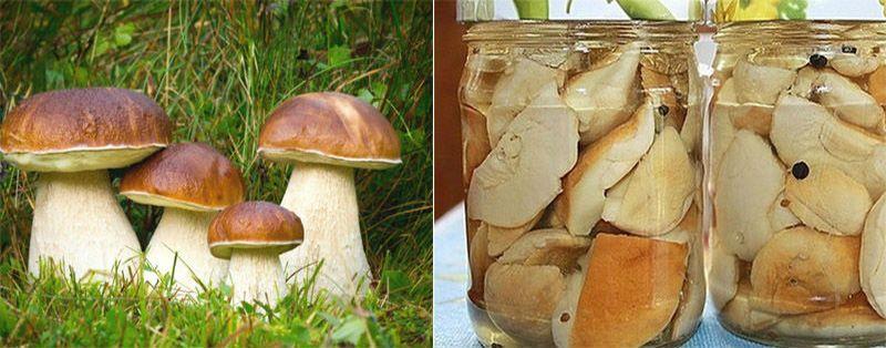 рецепты приготовления грибов без уксуса